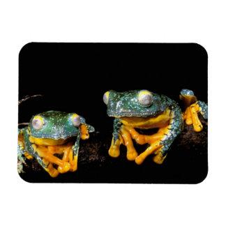 South America, Ecuador, Amazon. Leaf frogs Rectangular Photo Magnet