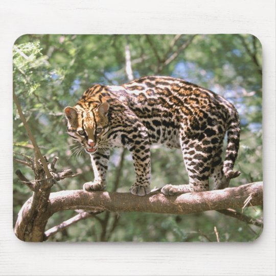 South America, Ecuador, Amazon. Ocelot Mouse Pad
