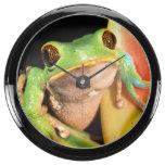 South America, Ecuador, Amazon. Tree frog Fish Tank Clocks
