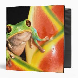 South America, Ecuador, Amazon. Tree frog Binder