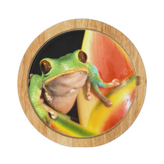 South America, Ecuador, Amazon. Tree frog Cheese Board