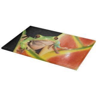 South America, Ecuador, Amazon. Tree frog Cutting Board