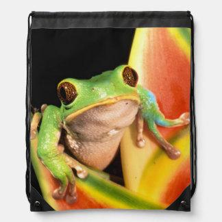 South America, Ecuador, Amazon. Tree frog Drawstring Bag
