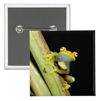 South America, Ecuador, Amazon. Tree frog (Hyla 2 Inch Square Button