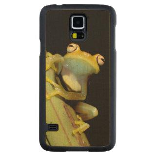 South America, Ecuador, Amazon. Tree frog (Hyla Carved® Maple Galaxy S5 Case