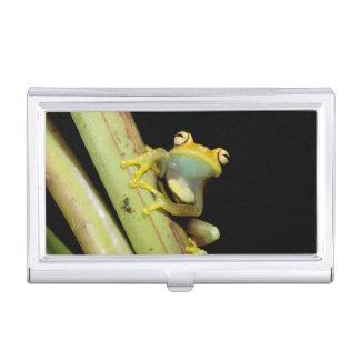 South America, Ecuador, Amazon. Tree frog (Hyla Case For Business Cards