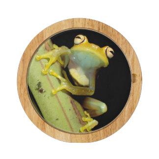 South America, Ecuador, Amazon. Tree frog (Hyla Cheese Platter