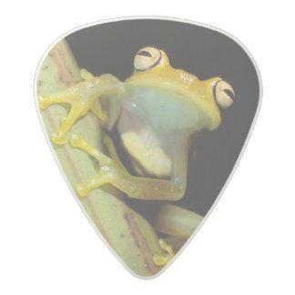 South America, Ecuador, Amazon. Tree frog (Hyla