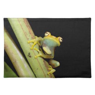 South America, Ecuador, Amazon. Tree frog (Hyla Cloth Placemat