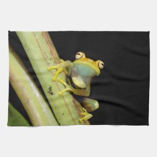 South America, Ecuador, Amazon. Tree frog (Hyla Hand Towel