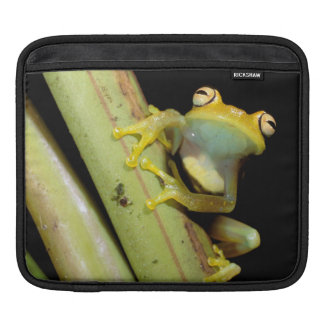 South America, Ecuador, Amazon. Tree frog (Hyla iPad Sleeve