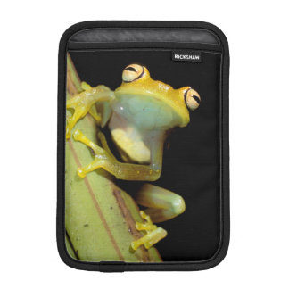 South America Ecuador Amazon Tree frog Hyla iPad Mini Sleeves