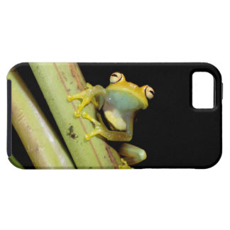 South America, Ecuador, Amazon. Tree frog (Hyla iPhone 5 Covers
