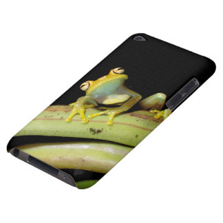 South America, Ecuador, Amazon. Tree frog (Hyla iPod Touch Cover