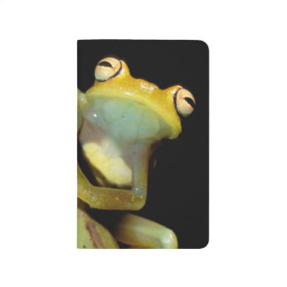 South America, Ecuador, Amazon. Tree frog (Hyla Journal
