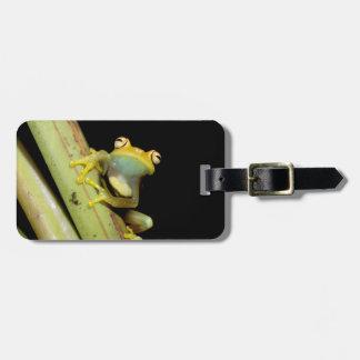 South America, Ecuador, Amazon. Tree frog (Hyla Bag Tag