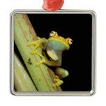 South America, Ecuador, Amazon. Tree frog (Hyla Metal Ornament