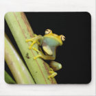 South America, Ecuador, Amazon. Tree frog (Hyla Mouse Pad