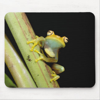South America, Ecuador, Amazon. Tree frog (Hyla Mouse Pad