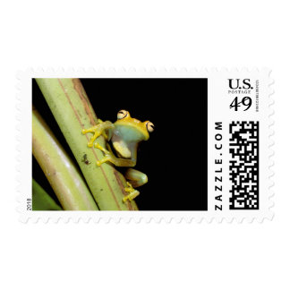 South America, Ecuador, Amazon. Tree frog (Hyla Stamps