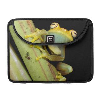 South America, Ecuador, Amazon. Tree frog (Hyla Sleeve For MacBooks