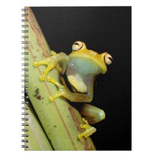 South America, Ecuador, Amazon. Tree frog (Hyla Spiral Notebook