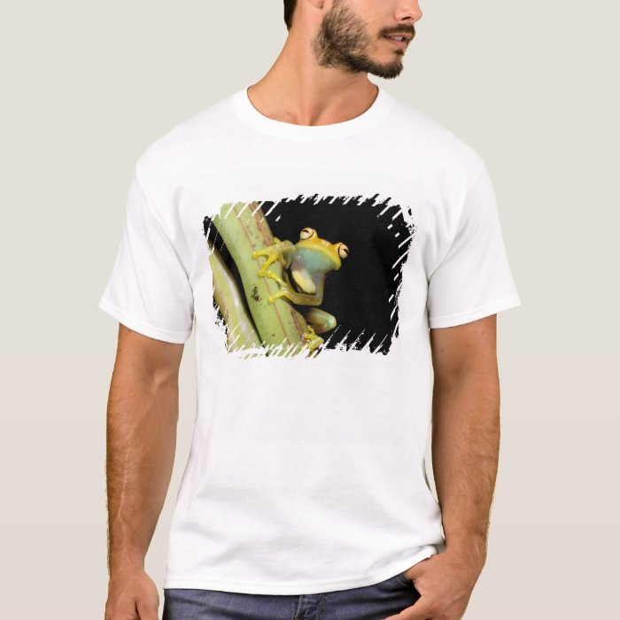South America, Ecuador, Amazon. Tree frog (Hyla T-Shirt