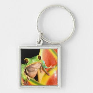 South America, Ecuador, Amazon. Tree frog Keychains