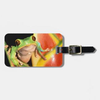 South America, Ecuador, Amazon. Tree frog Tag For Bags