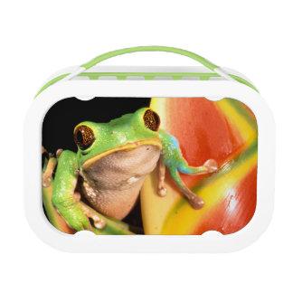 South America, Ecuador, Amazon. Tree frog Lunch Box