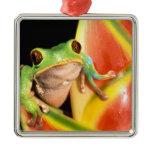 South America, Ecuador, Amazon. Tree frog Metal Ornament