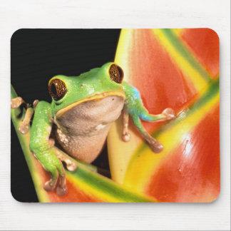 South America, Ecuador, Amazon. Tree frog Mouse Pad
