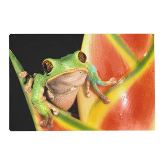 South America, Ecuador, Amazon. Tree frog Placemat