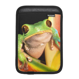 South America, Ecuador, Amazon. Tree frog Sleeve For iPad Mini