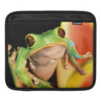 South America, Ecuador, Amazon. Tree frog Sleeve For iPads