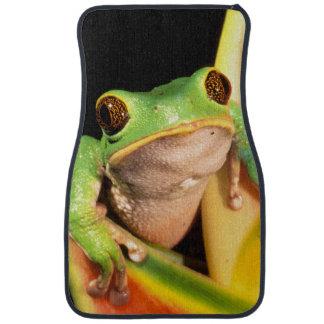 South America, Ecuador, Amazon. Tree frog Floor Mat