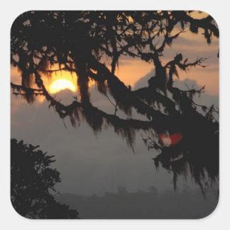 South America, Ecuador, cloud forest scene in Square Stickers