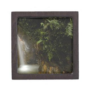 South America, Ecuador, eastern slope of the Keepsake Box
