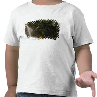 South America, Ecuador, eastern slope of the Tee Shirt
