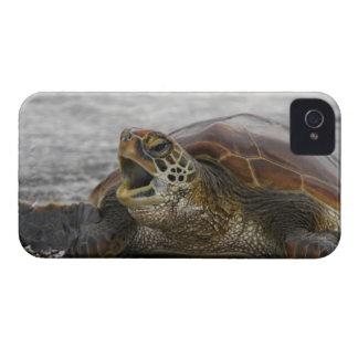 South America, Ecuador, Galapagos Islands, 2 Case-Mate iPhone 4 Cases