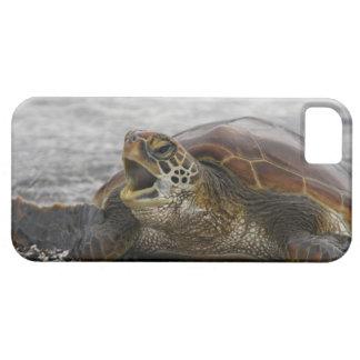 South America, Ecuador, Galapagos Islands, 2 iPhone 5 Cover
