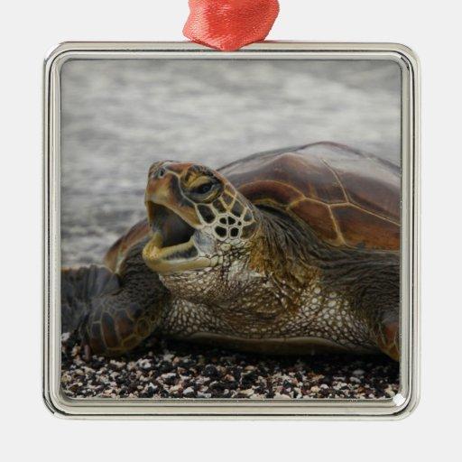 South America, Ecuador, Galapagos Islands, 2 Christmas Ornament