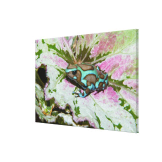 South America, Panama. Close-up of a variety Canvas Print