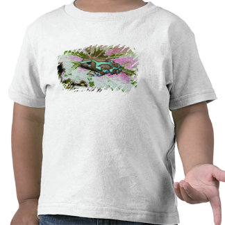 South America, Panama. Close-up of a variety Shirt