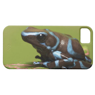 South America, Panama. Close-up of blue and iPhone 5 Covers