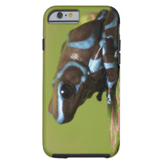 South America, Panama. Close-up of blue and Tough iPhone 6 Case
