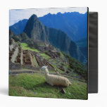 South America, Peru. A llama rests on a hill Binder