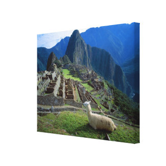 South America, Peru. A llama rests on a hill Canvas Print
