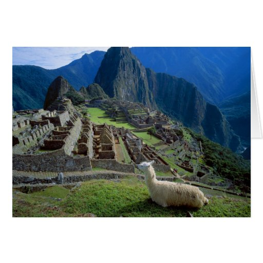 South America, Peru. A llama rests on a hill Card