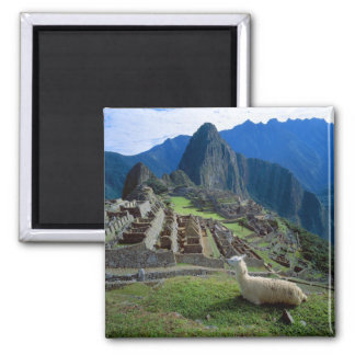 South America, Peru. A llama rests on a hill Magnet